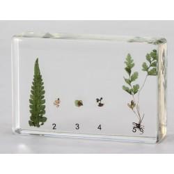 Colección del Reino vegetal