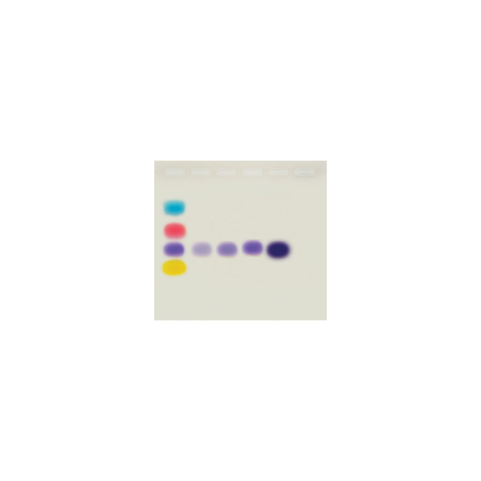 Kit simulación de PCR para electroforesis