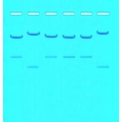 kit de Huella genética